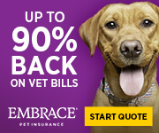 Featured today - Embrace Pet Insurance